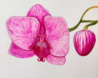 Orchid, watercolor and ink original painting, 9x12