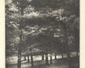 COOK FOREST HILLSIDE original hand printed photo etching