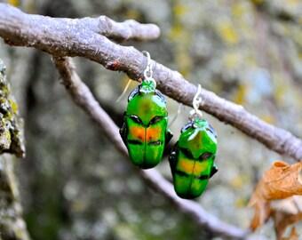 Floating Real Flower Beetle Earrings Green, Blue, Orange, Moonrise Kingdom Movie
