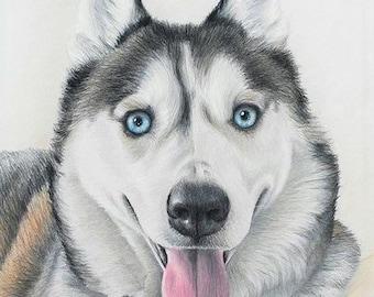 CUSTOM HAND-DRAWN Dog Pet PortraiT pet memorial dog portrait hand-drawn 8x10 cat dog horse best etsy shop, top etsy seller