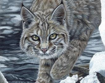 Bobcat Lynx wildcat Original Artwork by Carla Kurt wildlife nature top selling artist