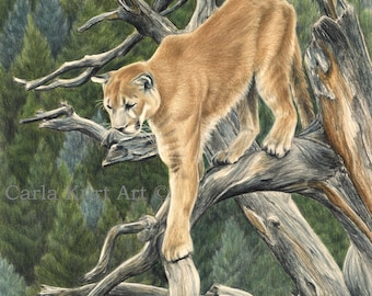 Signed print MOUNTAIN LION 11x14 cougar art wildlife nature top selling art best etsy art