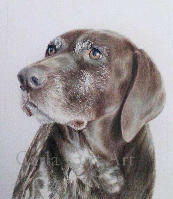 99262f4ecc0a CUSTOM Pet Portrait dog portrait 11x14 cat horse memorial | Etsy