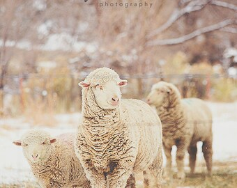 Snow Sheep Series 1