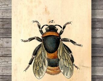 Antique Bee Print Etsy