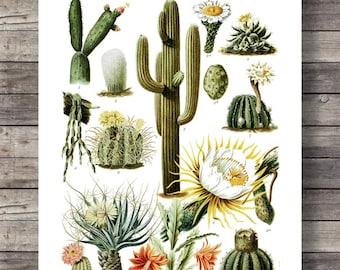 Cactus Vintage botanical illustration Printable art Vintage Cactus cacti art print Cacti cactus art Cacti art print succulent  decor cactus