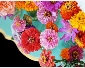 Zinnia Dreams - 5 Postcard set