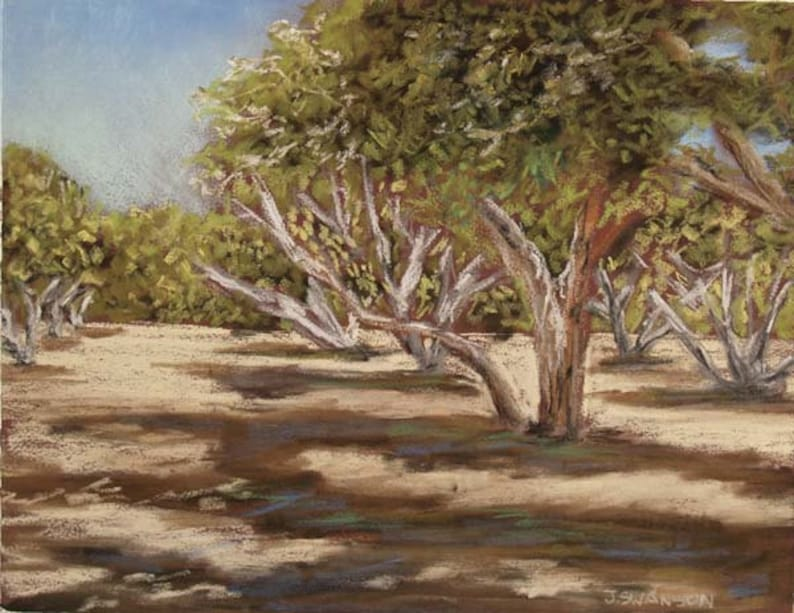 Arizona Orchard original Pastel Painting Sahuaro Ranch Park image 0