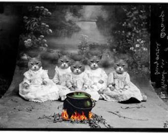 Halloween cats download