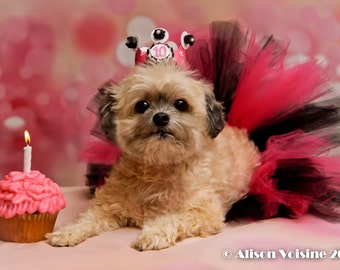 Girl Dog Tutu and Birthday Crown Tiara or Hat Set, Puppy Party Smash Cake Photo Props, Pet Accessories outfit