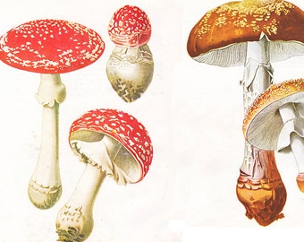 four different vintage mushroom prints, mycology printable digital images,  no. 876
