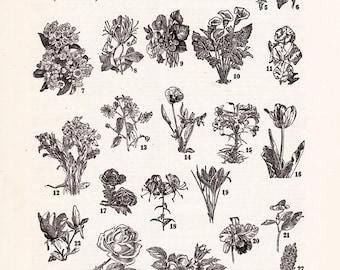 Vintage flower print, a charming 1940's black and white illustration, printable digital download no. 1473