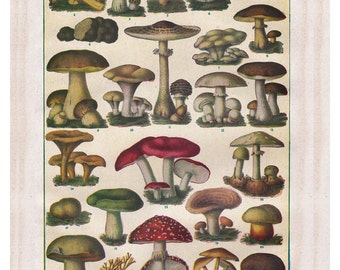 vintage mushroom botanical print, a printable digital download,  no.  18