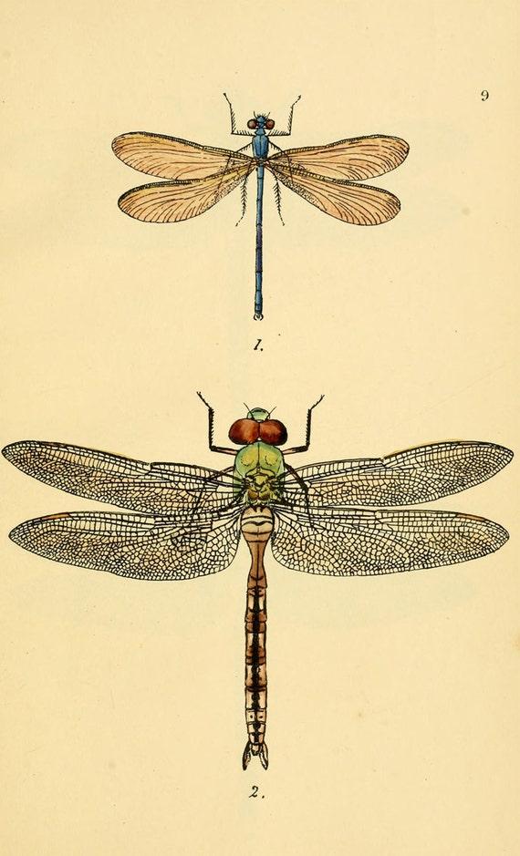 vintage dragonfly art print printable digital download no.