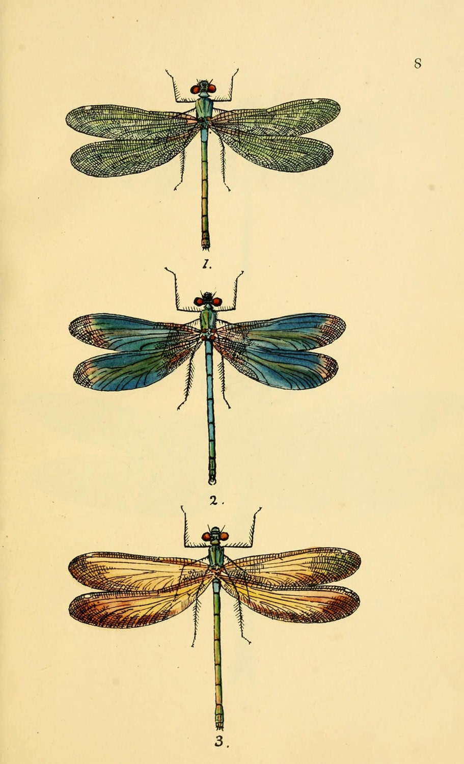 dragonfly art print an antique scientific illustration