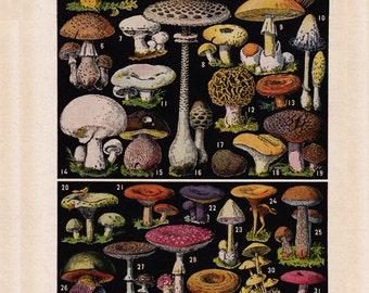 French mushroom print, a printable digital download, no.  1426