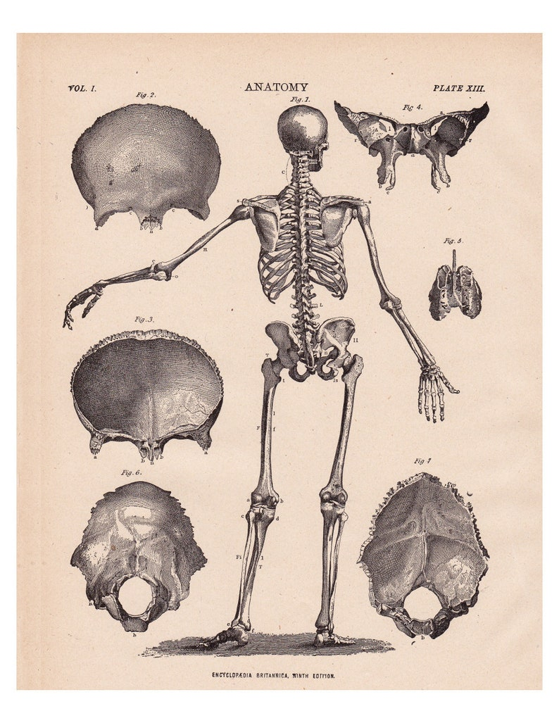 photograph about Skeleton Printable named antique skeleton print, a printable typical electronic picture no. 640