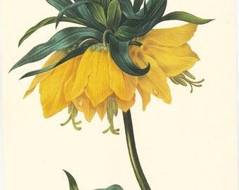 Pierre Redoute botanical print, Fritillaria Imperiale, printable digital download no. 718