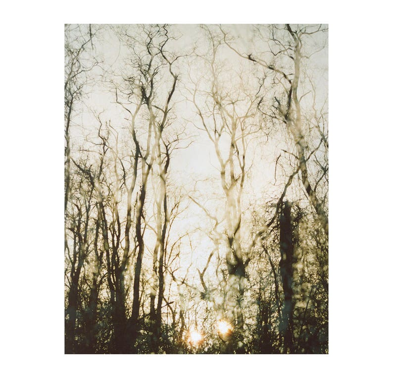 faded forest: nature photography. ethereal winter woods sunset image 0