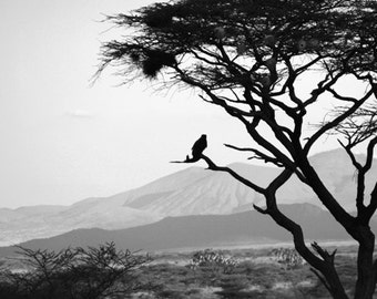 Bird in a Tree - Digital Download Photograph