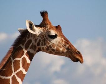 Giraffe Portrait - Digital Download Print
