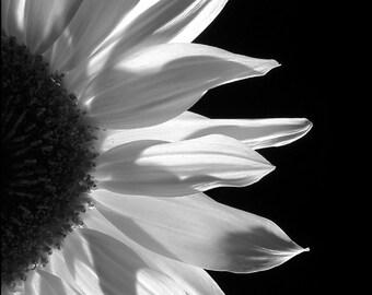 Sunflower Monochrome  - Digital Download