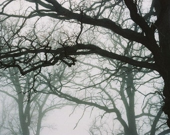 TREES IN FOG Series Number 5