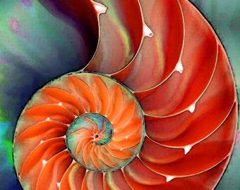 Nautilus Shell Art Print from Painting Colorful Red Beach Ocean Sea Shells CANVAS Ready To Hang Large Orange Natural Green Aqua Elegant Art