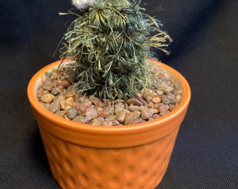 Crocheted Cactus with white flower