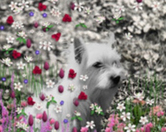 Painting (Digital Collage) - Violet in Flowers - Art Card, ACEO