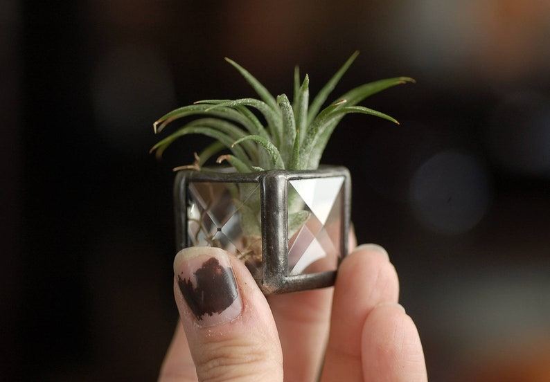 Air Plant Holder. Stained Glass Air Plant Planter. Air Plant image 0