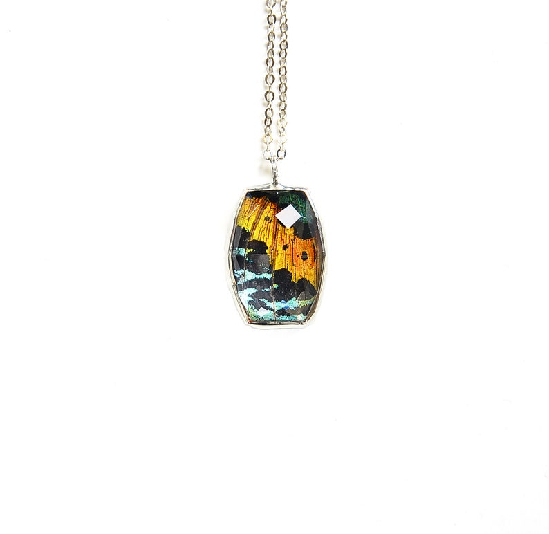 Rainbow Butterfly Wing Necklace Real Sunset Moth Pendant image 0