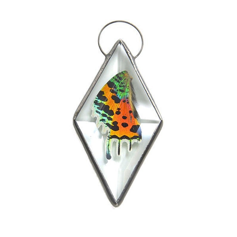Real Sunset Moth Wall Hanging Stained Glass Rainbow Moth Real image 0