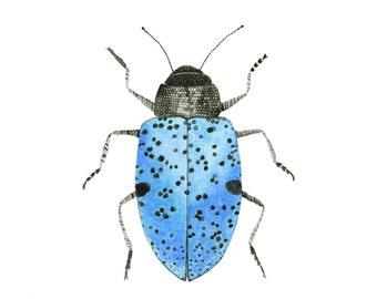 Pretty Blue Beetle Art, Beetle Art,  Entomology Art , Insect Art, Bug Art, Farmhouse Decor, Rustic Decor, Woodland Art, Nature Art Print