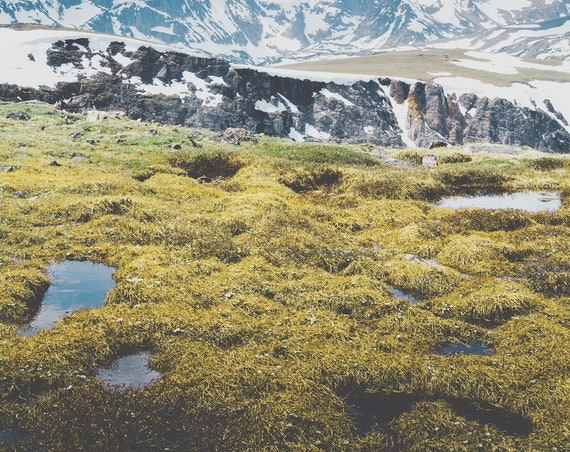 """Alpine Marshes"" - landscape photography"