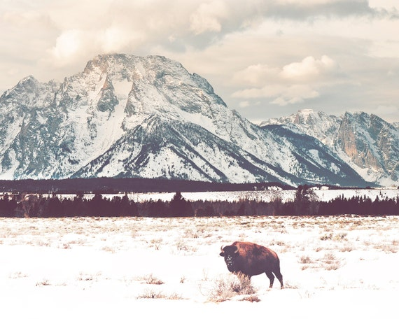"""Bison and Tetons"" - landscape photography"