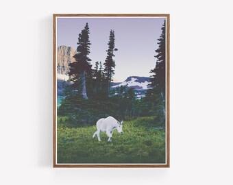 Glacier National Park Wildlife Print