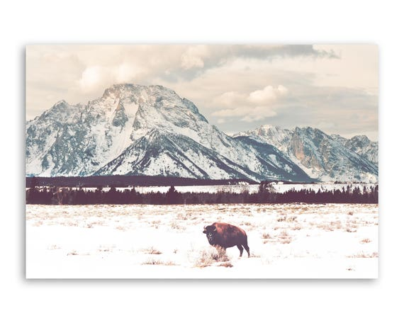 """Bison and Tetons"" - photograph on canvas"
