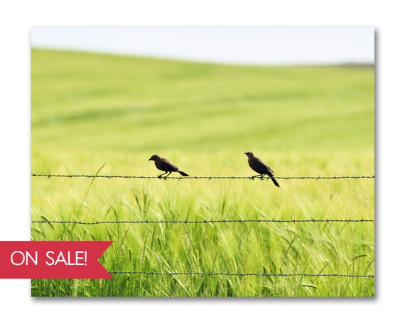 Two in the Barley - landscape photography