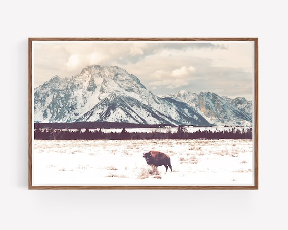 """Bison and Tetons"""
