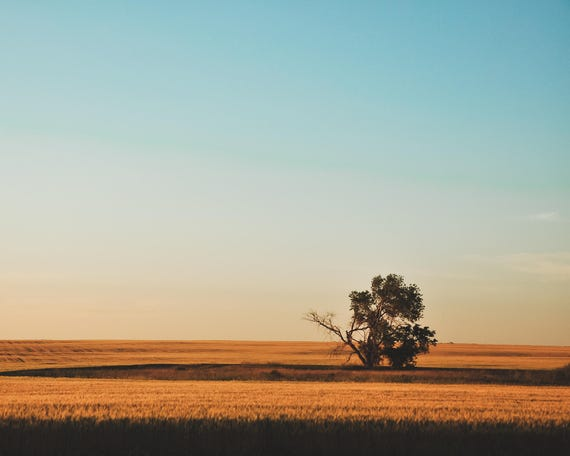 """Field of Dreams"" - landscape photography"