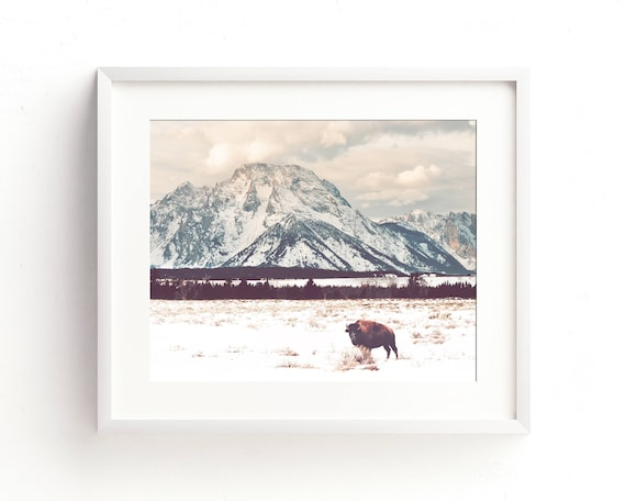 """""""Bison and Tetons"""" - landscape photography"""
