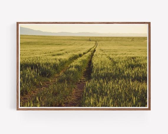"""The Beaten Path"""