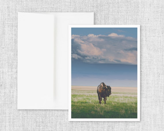 """Sunlight Bison"" - greeting card"