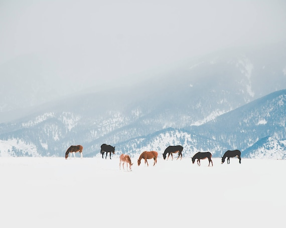 """Winter Pastures"" - landscape photography"