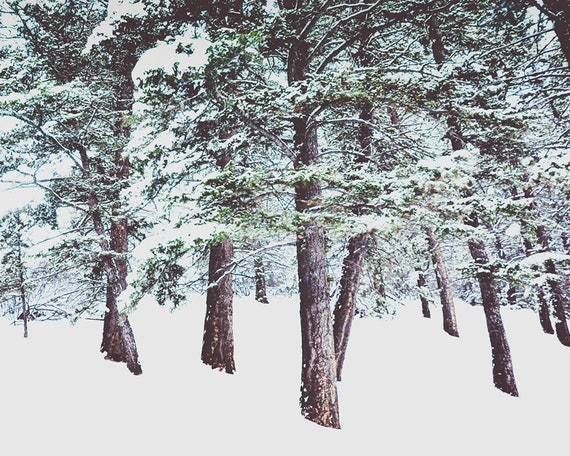 """""""Snow on the Forest Floor"""""""