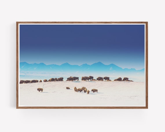 """""""Blue Mountains Bison"""""""