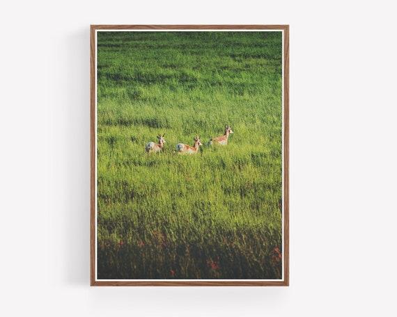 """""""Wild Prairies"""""""