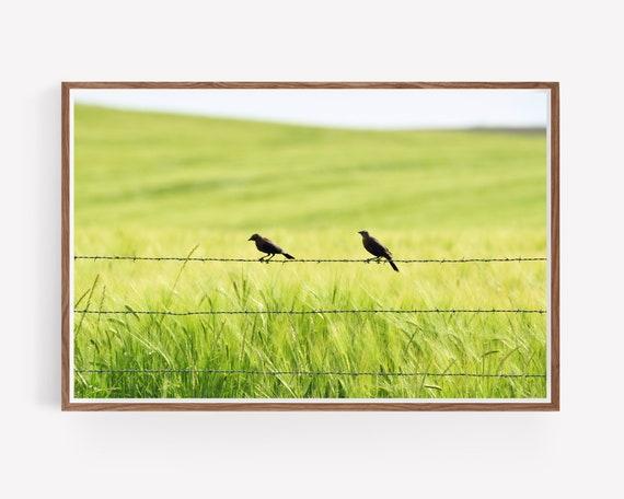 Two in the Barley