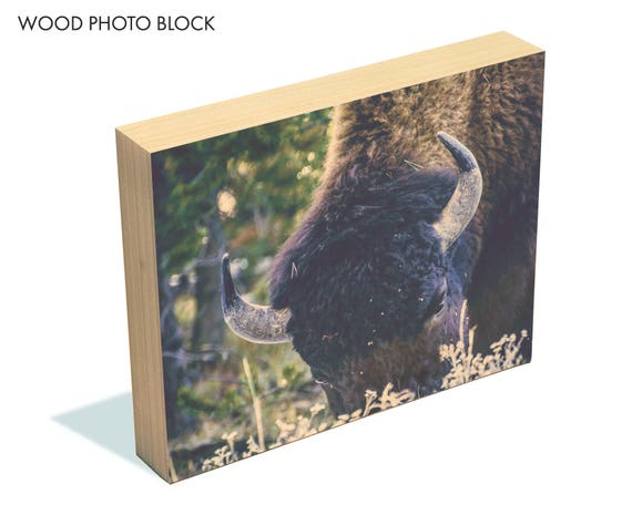 """Afternoon Grazing"" - wood photo block"
